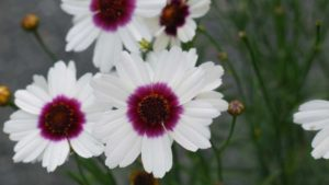Top Picks for Plants to Produce With Limited Labor