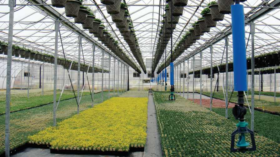 Corso's Perennials greenhouse