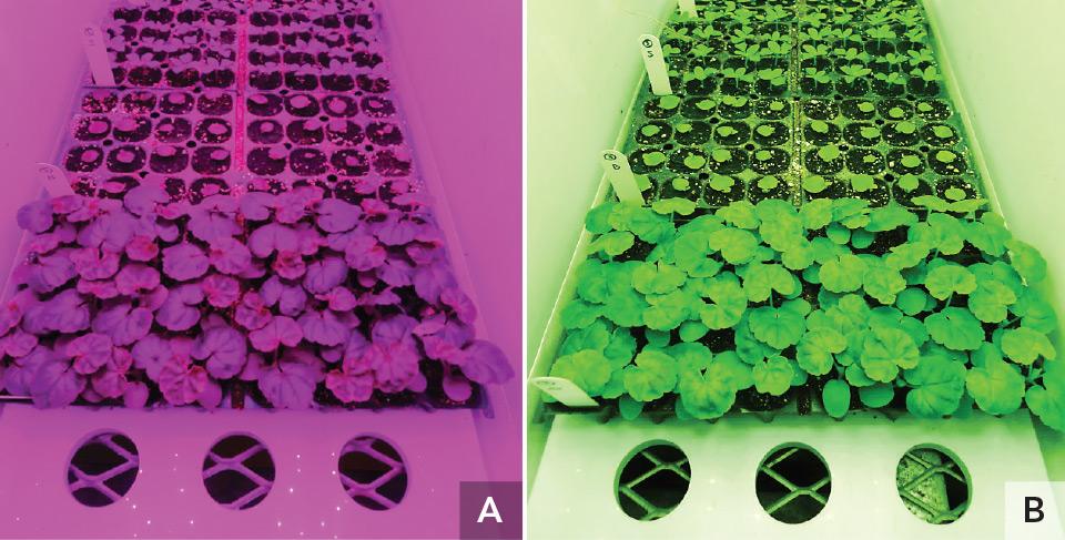 MSU-Floriculture-Plugs-Under-LEDs