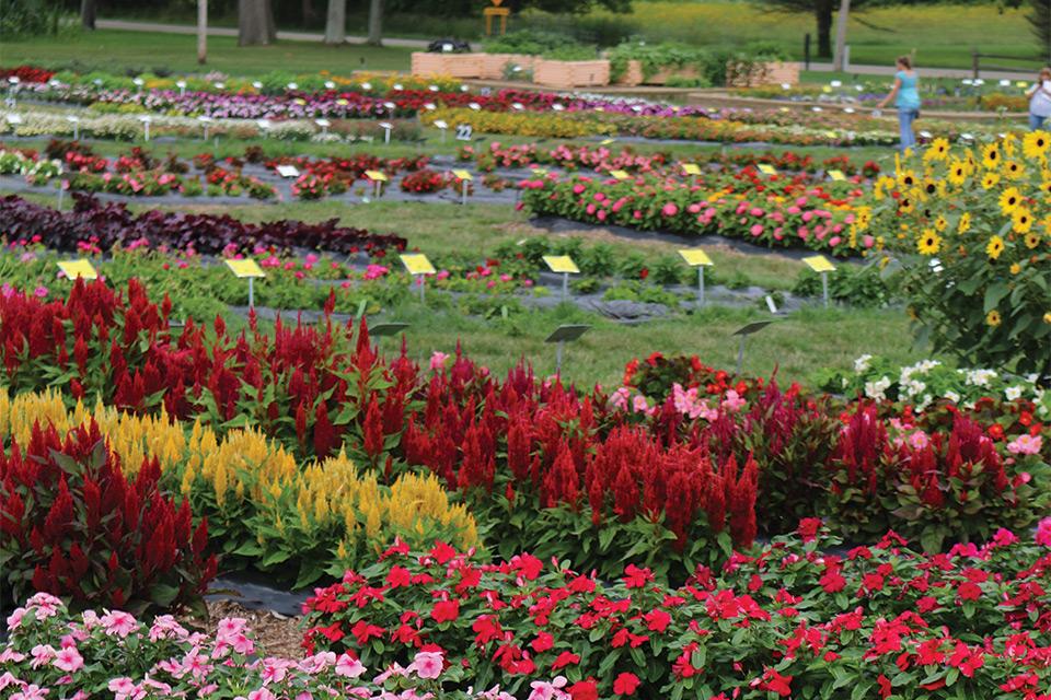 Raker-Robertas-2018-Trials michigan garden plant tour