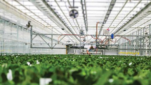 What Is the Current State of Labor in the Greenhouse Industry?