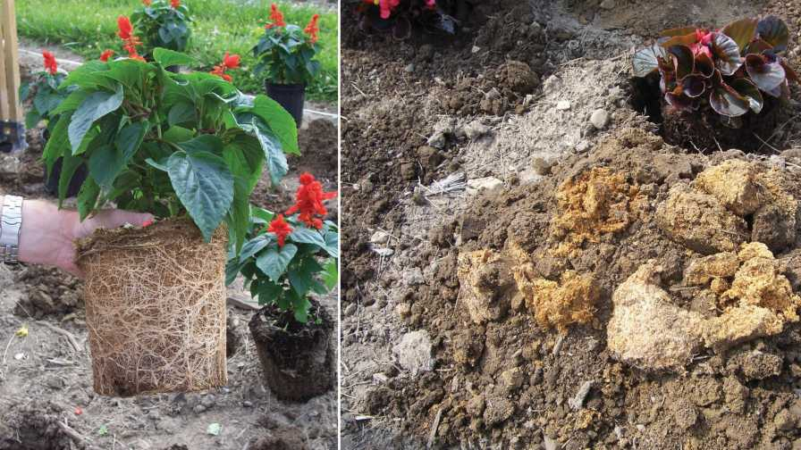 Biological activity in rootballs collage