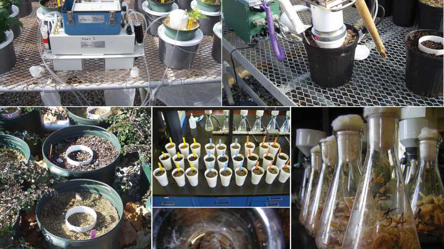 Measuring microbial activity in wood substrates collage