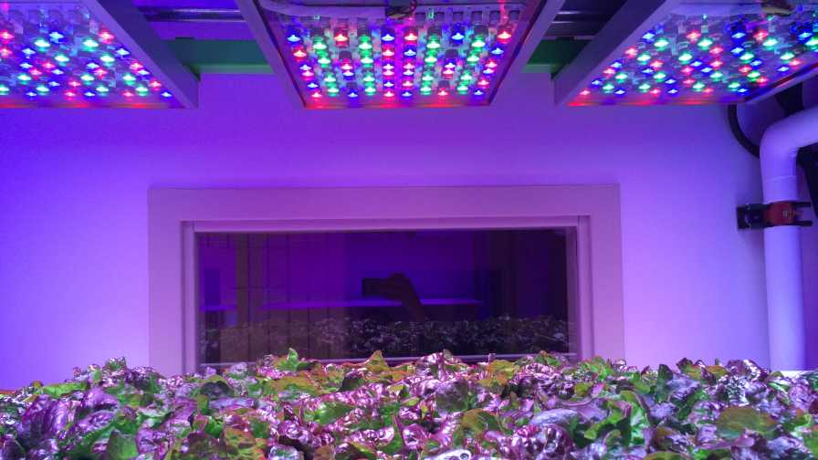 Osram's Phytofy RL lighting system