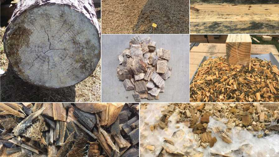 Fungi growth in wood substrates collage