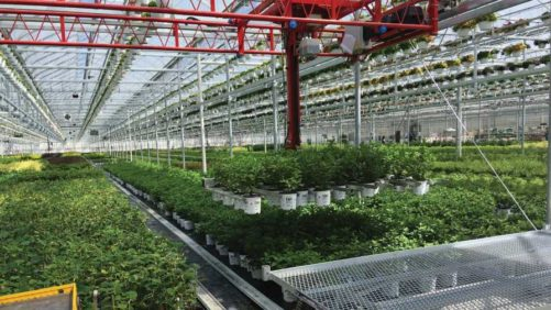 How to Pencil Out Technology Upgrades in Your Greenhouse