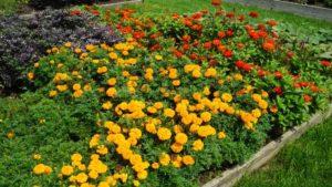 2018 Midwest Floriculture Field Trials: Reiman Gardens, Iowa State University