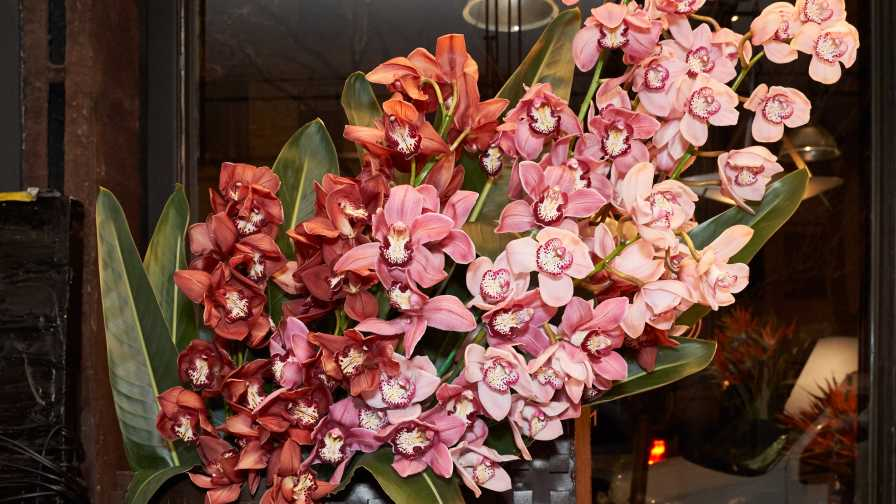 Designer Cut Flowers' Cymbidium orchids on display in NYC
