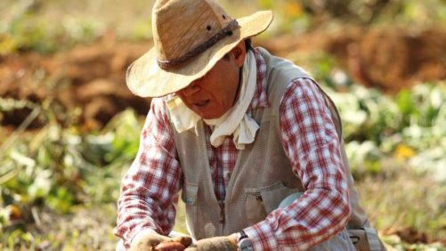 The Current and Future Farm Labor Outlook in Mexico