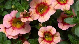 New Varieties Website From National Garden Bureau Now Available