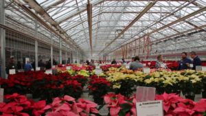 Plantpeddler's Poinsettia Day Featured More Than 125 Varieties