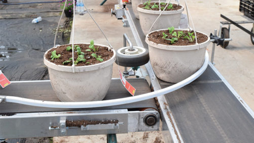 New Conveyors and Benches Help Move Plants More Efficiently in the Greenhouse
