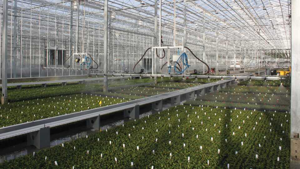Rainbow Greenhouses propagation zone