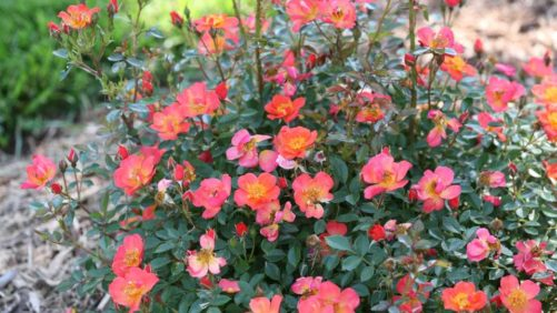 More Coral-Themed Plant Varieties That Can Make a Splash at Your Greenhouse
