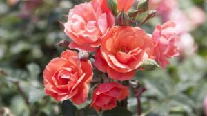 More Coral-Themed Plant Varieties From Leading Breeders and Brokers