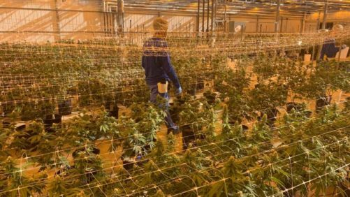 Cannabis Grower ForwardGro Fined, Placed On Two-Year Probation for Using Banned Crop Protection