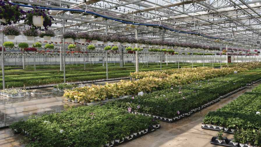 Nicely laid-out greenhouse operation Vigeo