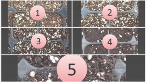 Ways to Balance Air and Water in Plant Propagation Cells