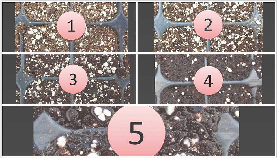 Moisture levels of different root substrates