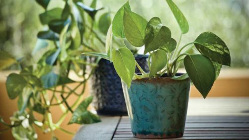 Ways to Keep Your Customers Happy with Houseplants