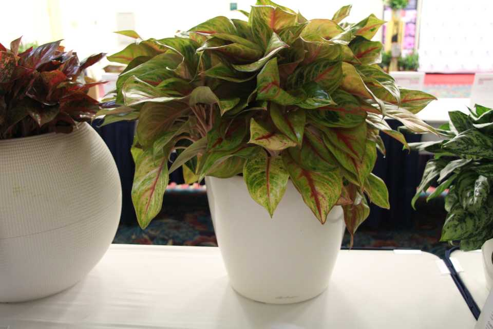 23 New Tropical and Foliage Plants from TPIE 2019