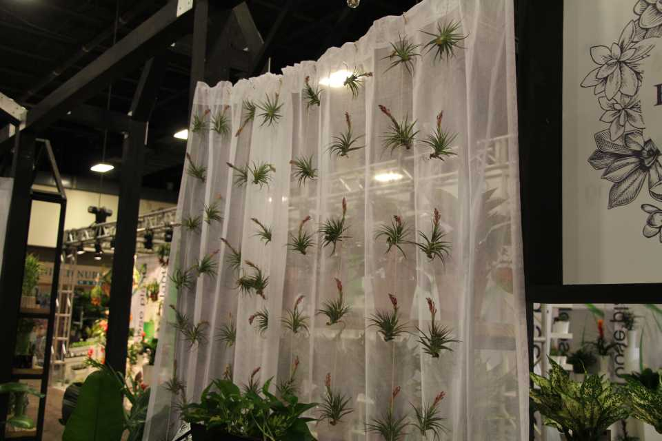 Air plant curtain