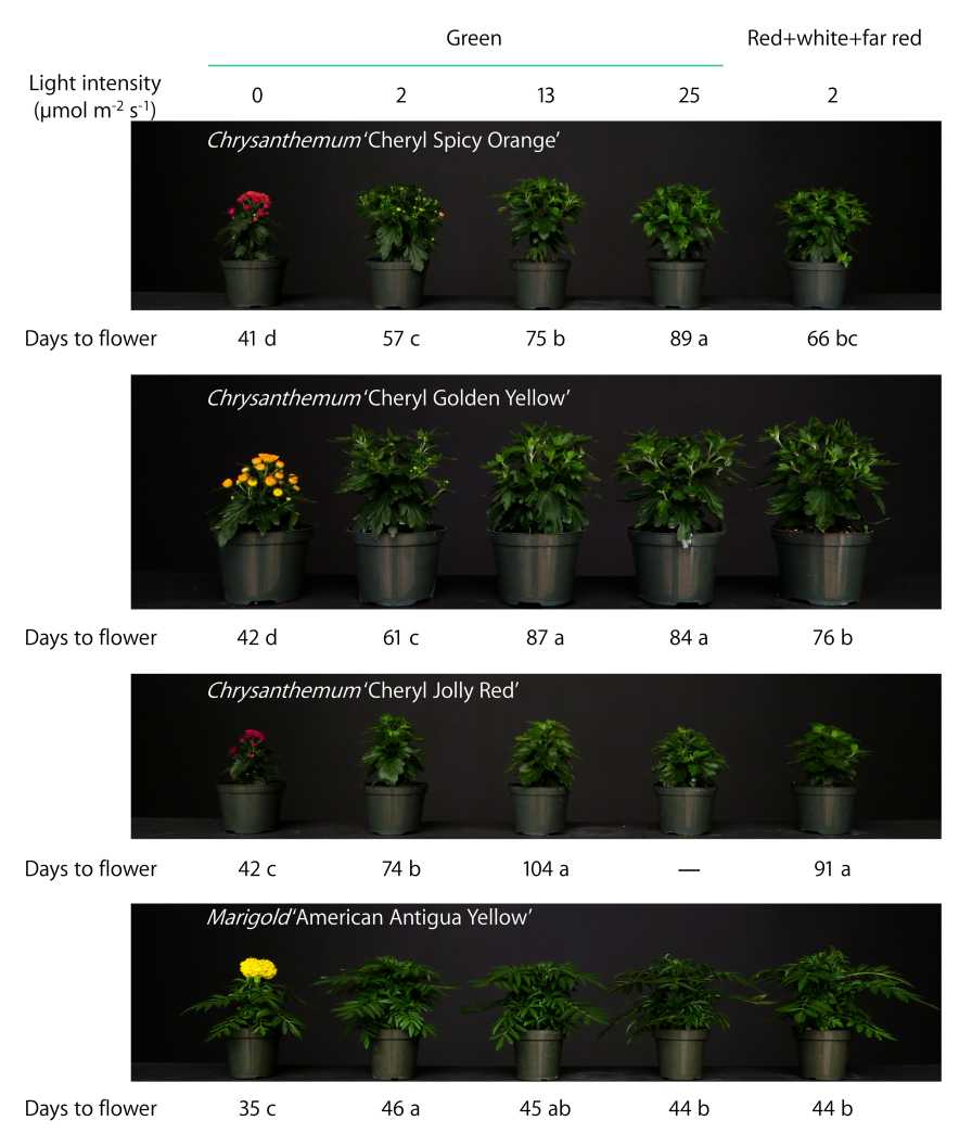 Short-day plant lighting experiment growth graphic