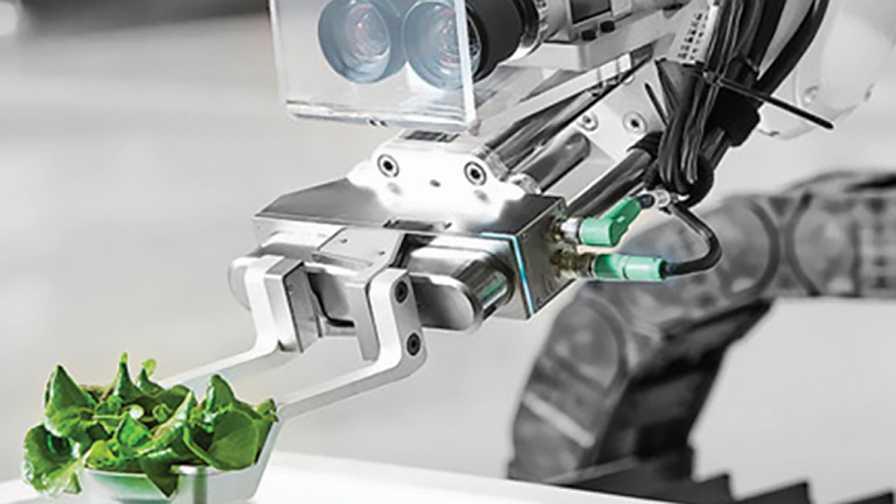 Robot sensing and sorting greenhouse lettuce