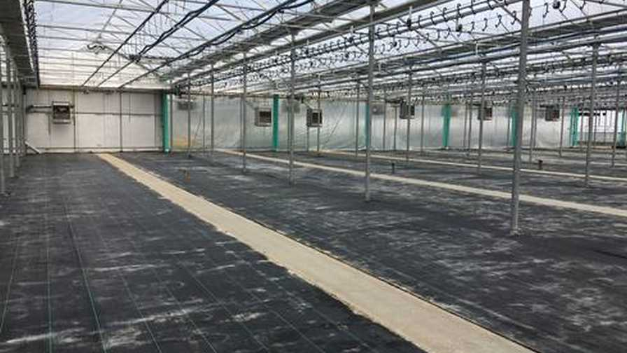 Prep-Your-Greenhouse-for-Spring greenhouse sanitation