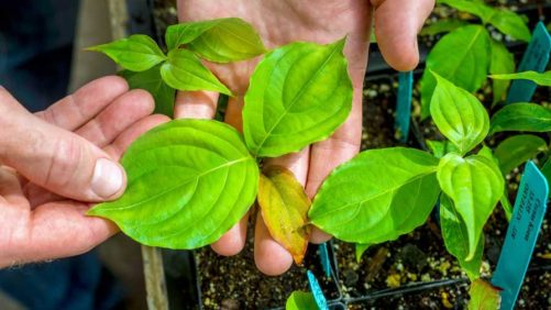 Seed Your Future Launches New Horticulture Career Exploration Tool