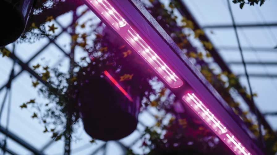Signify-LEDs-at-Iwasaki LEDs