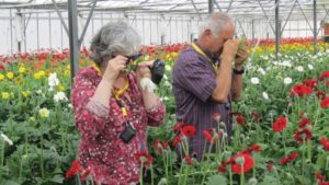 Don't Let Thrips Trip up Biocontrol in the Greenhouse
