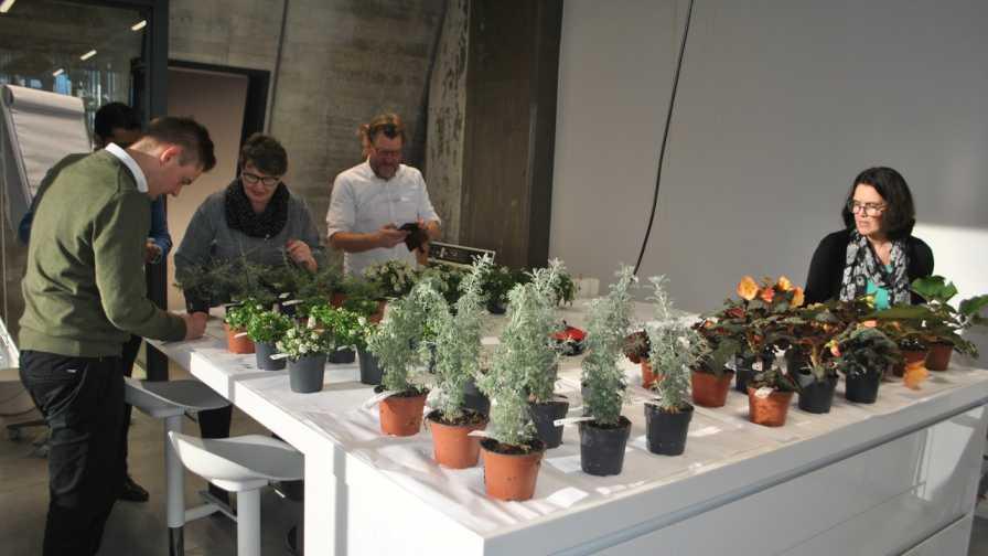 Dummen Flower Fragrance LEDs