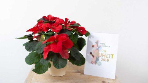 Eight Award-Winning Varieties From IPM Essen