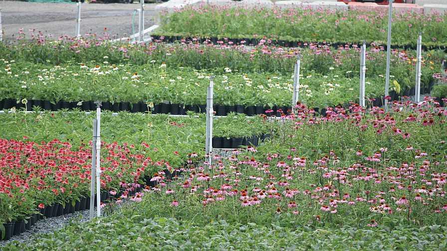 The Perennial Farm landscape