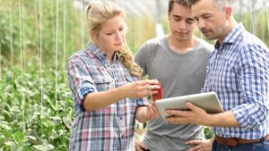 How Blockchain Technology Can Work for Greenhouse Growers