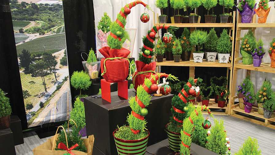 Creative packaging sells holiday plants