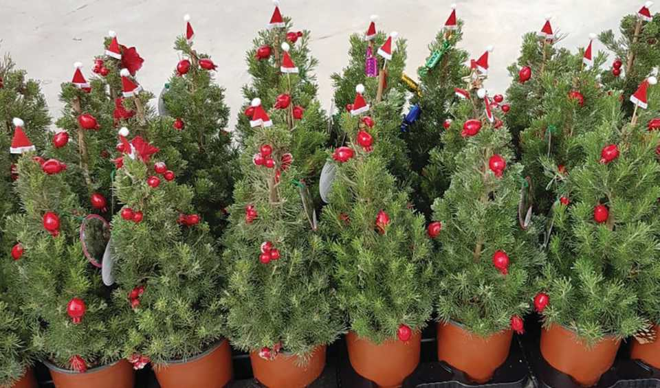 New Landscape Shrubs To Watch For From Cast 2019 Greenhouse Grower