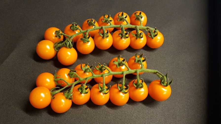 Royalstar-Tomato-Sakata