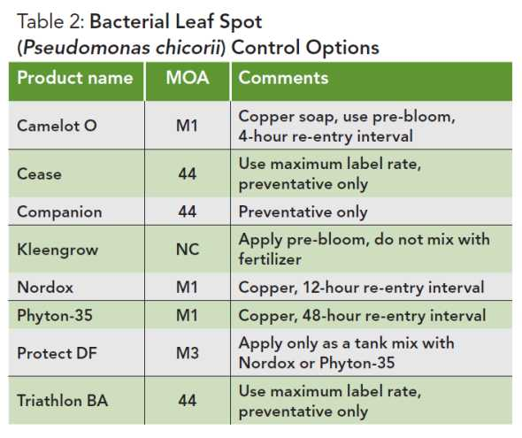 Table of Bacterial leaf spot control for garden mums