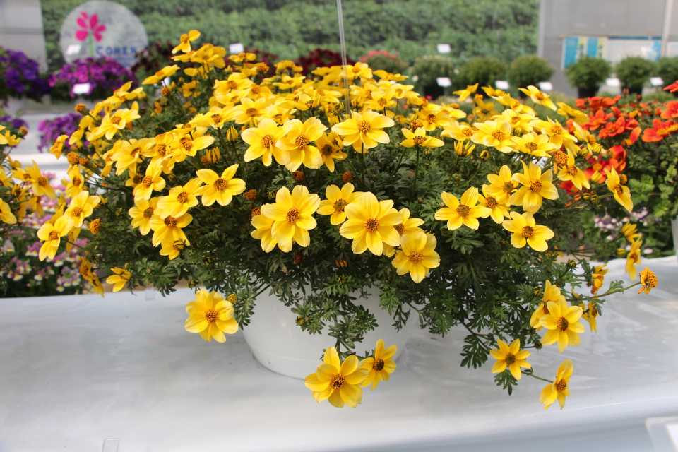 8 New Bidens For Pollinators From CAST 2019