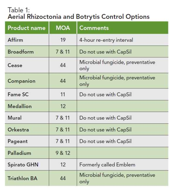 Table of Botrytis control options for garden mums