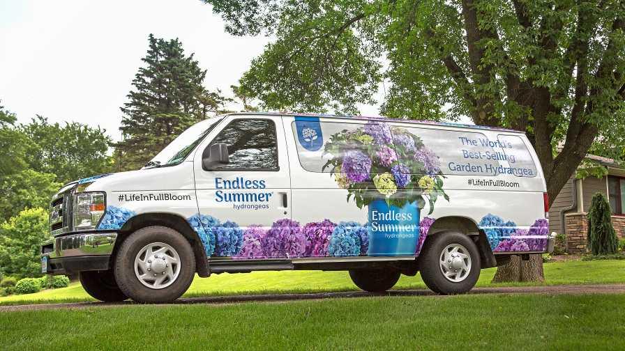 Endless Summer Van Bailey Nurseries