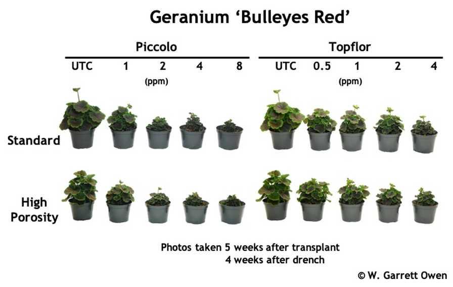 Geranium PGR trial graphic
