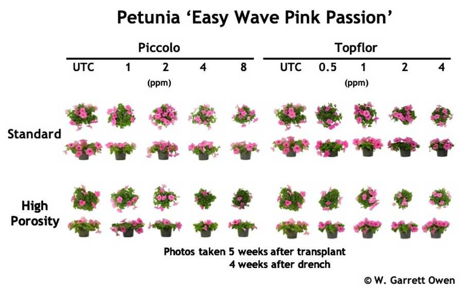 Petunia PGR trial graphic