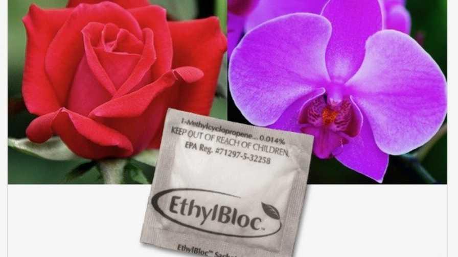 Oasis EthylBloc Sachets ethylene inhibitor