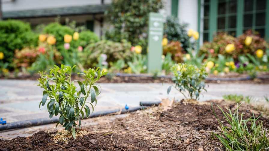 Reynolda Gardens Boxwood Blight