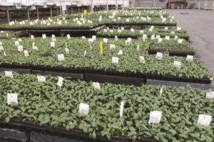 biocontrols, beneficial insects