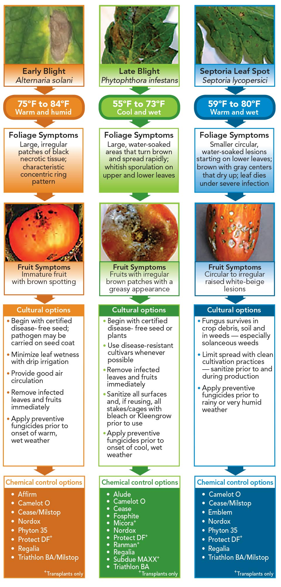 What to Do When Good Tomatoes Go Bad - Greenhouse Grower