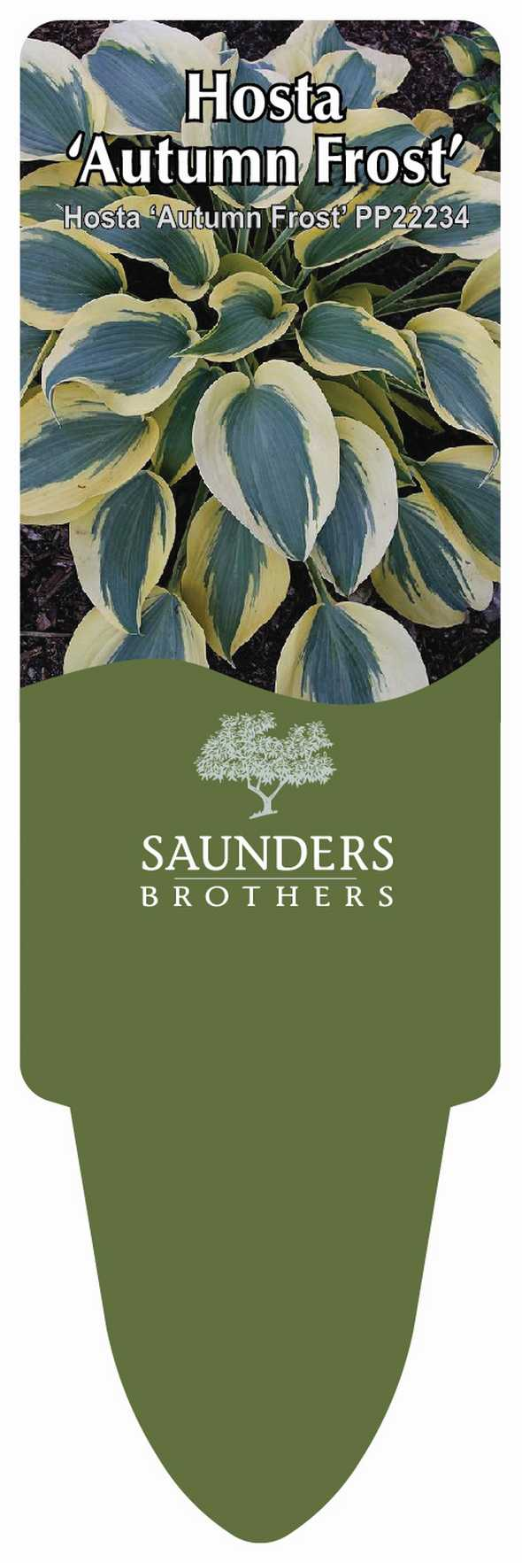 Saunders Brothers AR stake from HIP Labels